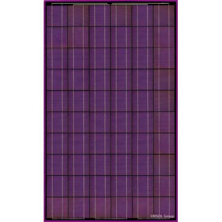 Panneau solaire BISOL Spectrum Purple 255W